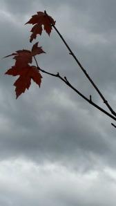 Soul of Autumn